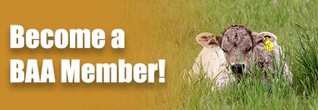 BAA Membership Ad
